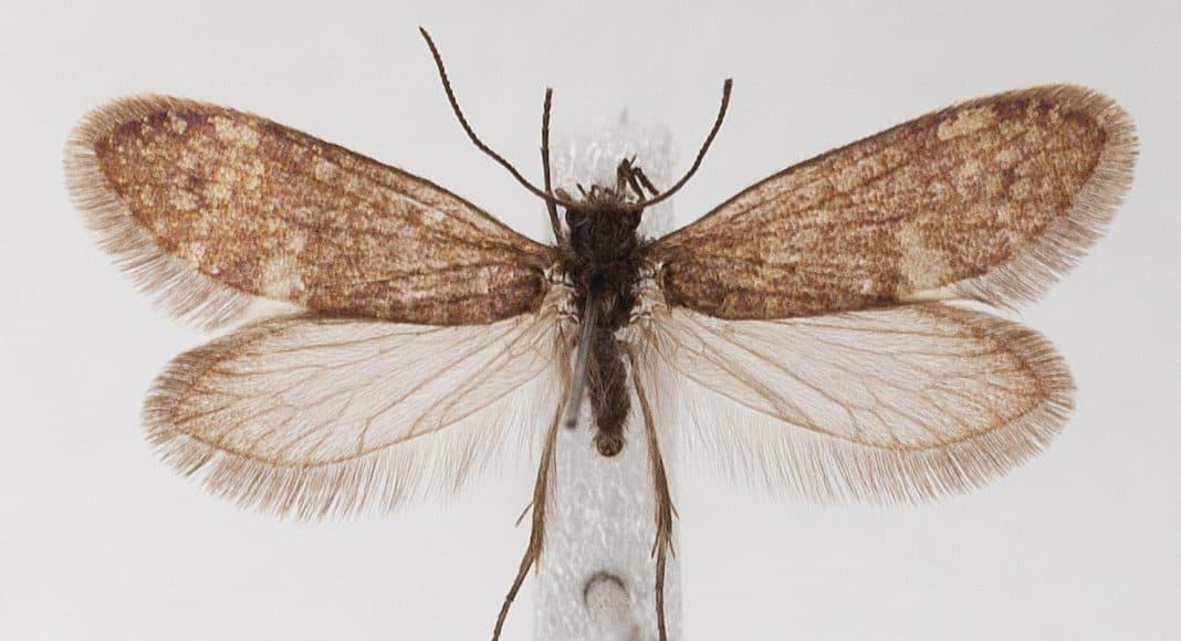 Evolutions Beispiel: primitiver Schmetterling.