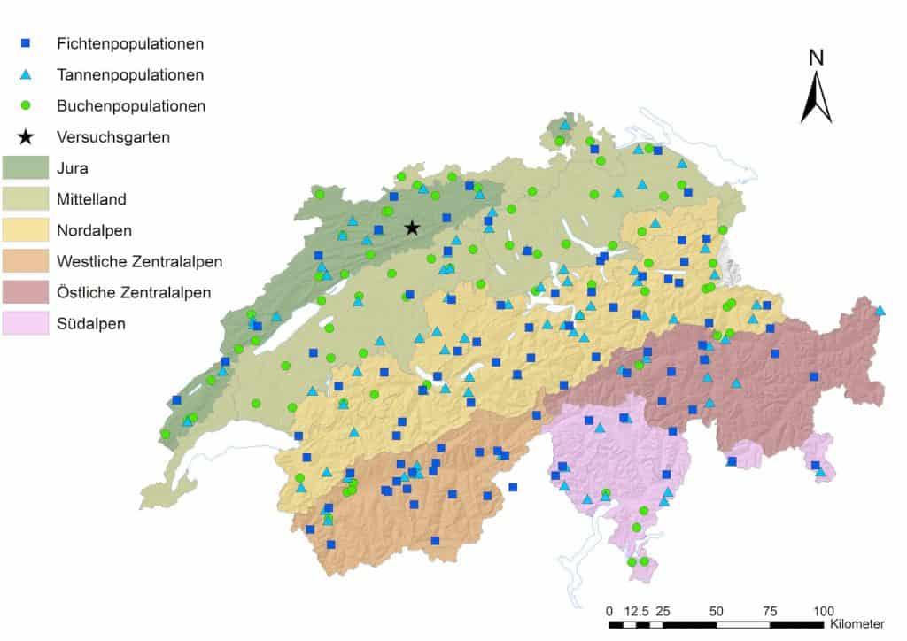 Verbreitung von Fichten, Tannen und Fichten in der Schweiz.