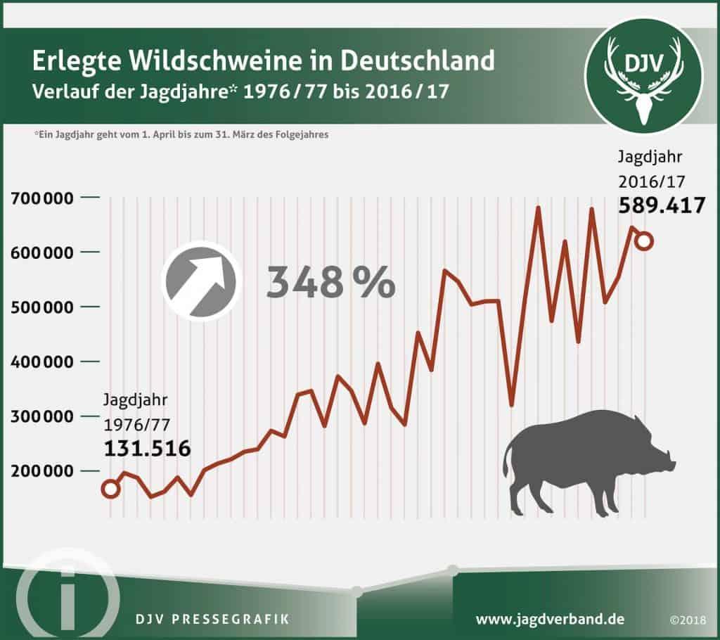 Immer mehr Wildschweine wurden in den letzten Jahren in Deutschland erlegt.