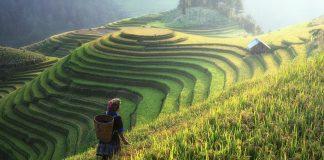 Kultur und Natur sind verbunden: hier eine Reisplantage in Asien.