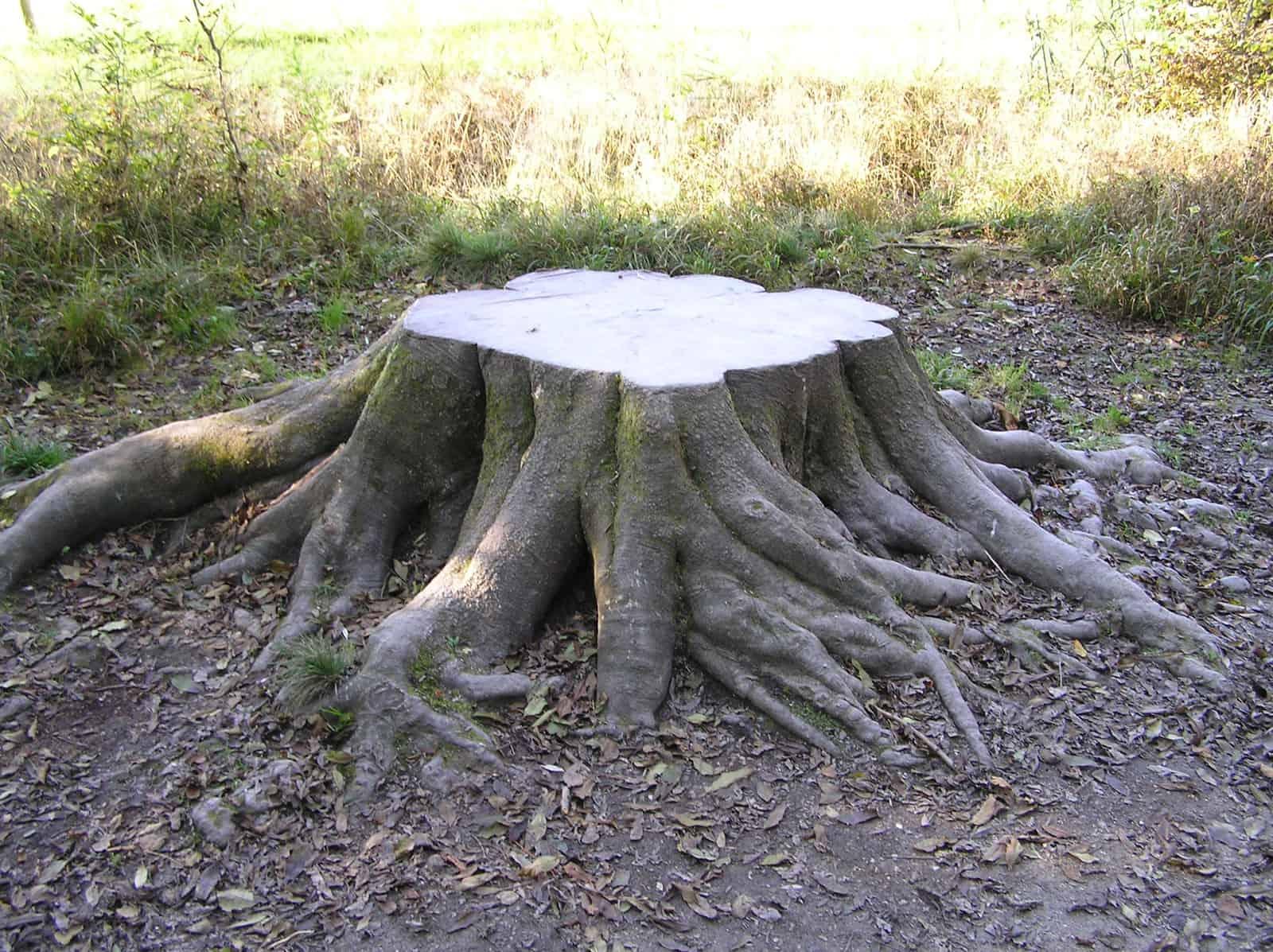 5g bäume fällen