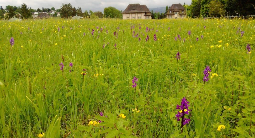 Begrünte Dächer können auch die Biodiversität unterstützen.
