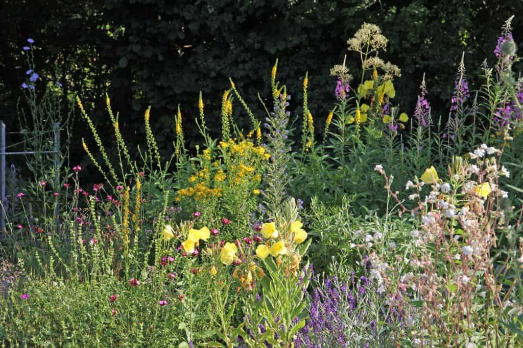 Vielfältige Blumenwiese im Garten.