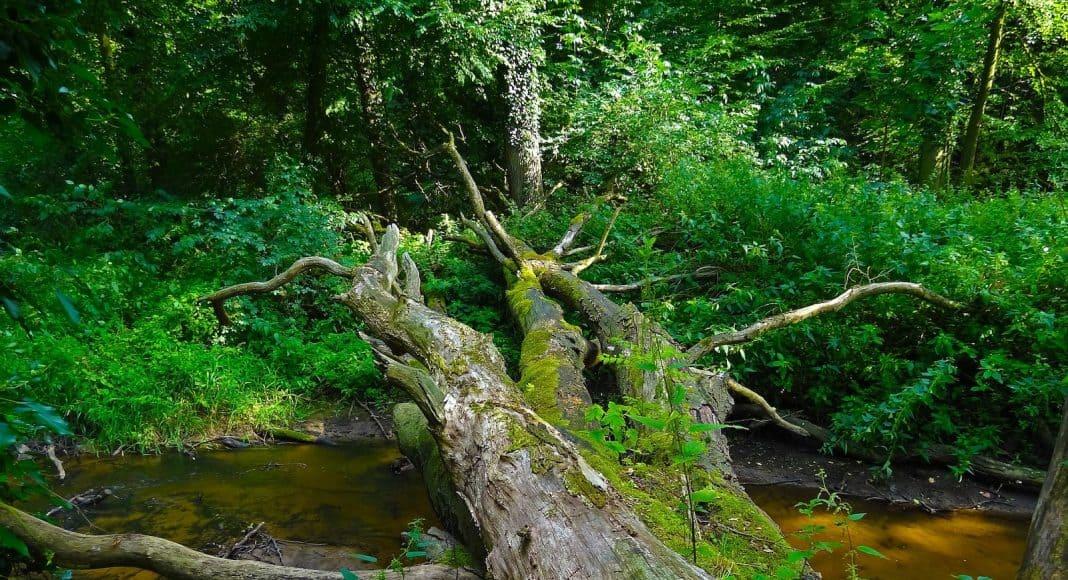 Ein Stück Urwald findet sich in Europa immer weniger.