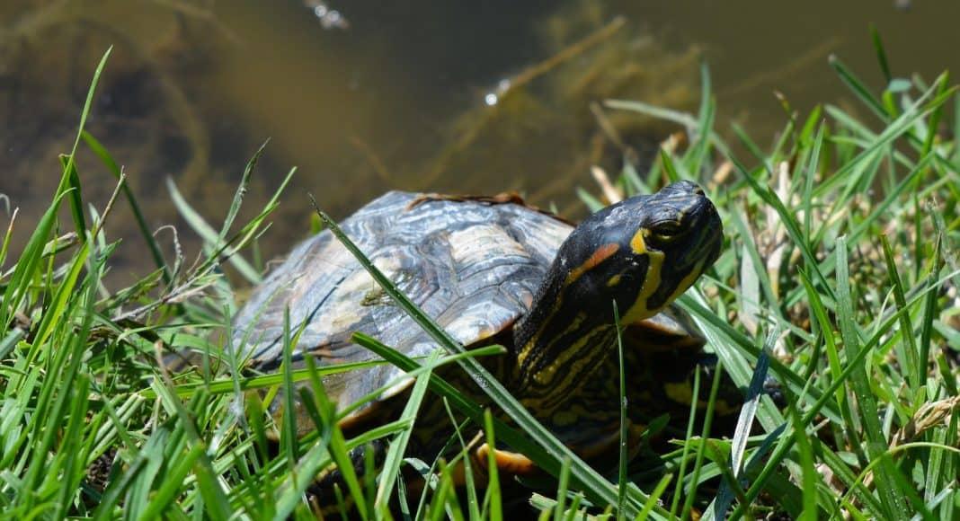Richtige Tierhaltung bei Schildkröten ist wichtig.