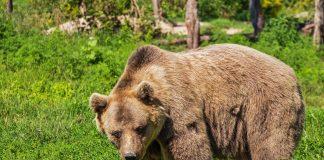 In Zug wurde ein Bär gesichtet.
