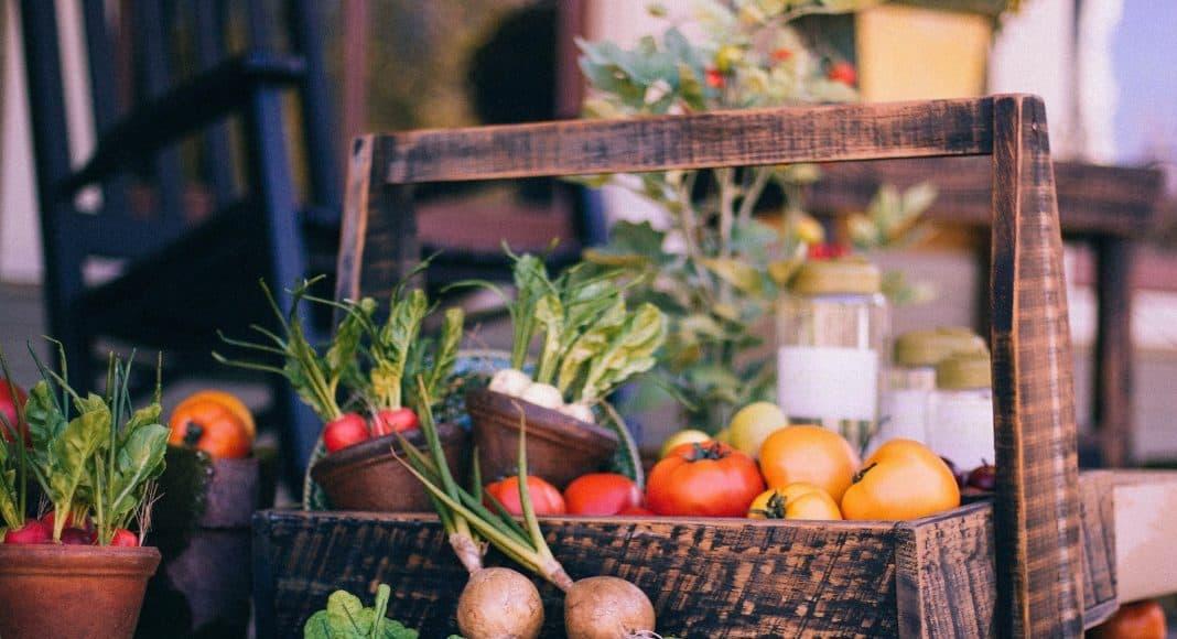 Ein Korb voll von Gemüse, dass ohne Pestizide gedeit sind.