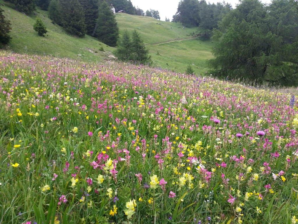 Eine Wiese mit vielen Pflanzenarten fördert die Biodiversität.