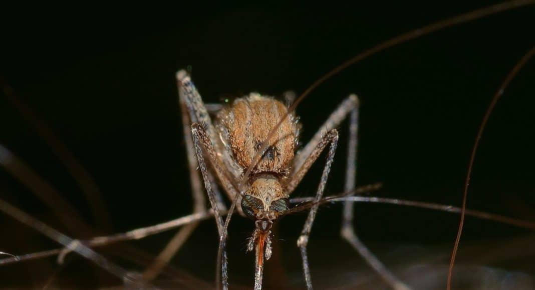 Mückenstiche sind mit einfachen Hausmittel zu bekämpfen.
