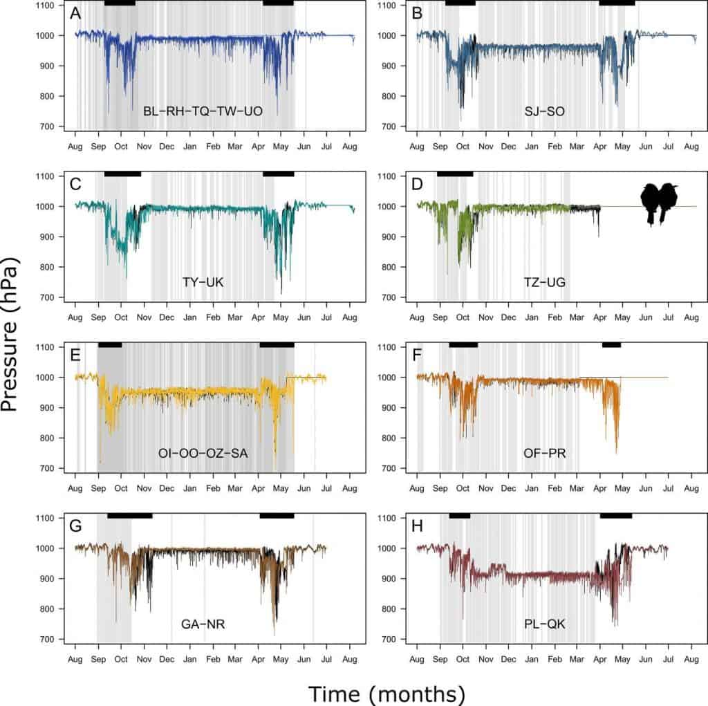 Graphik der Flughöhe der Bienenfresser in ihre Winterquartiere und zurück.