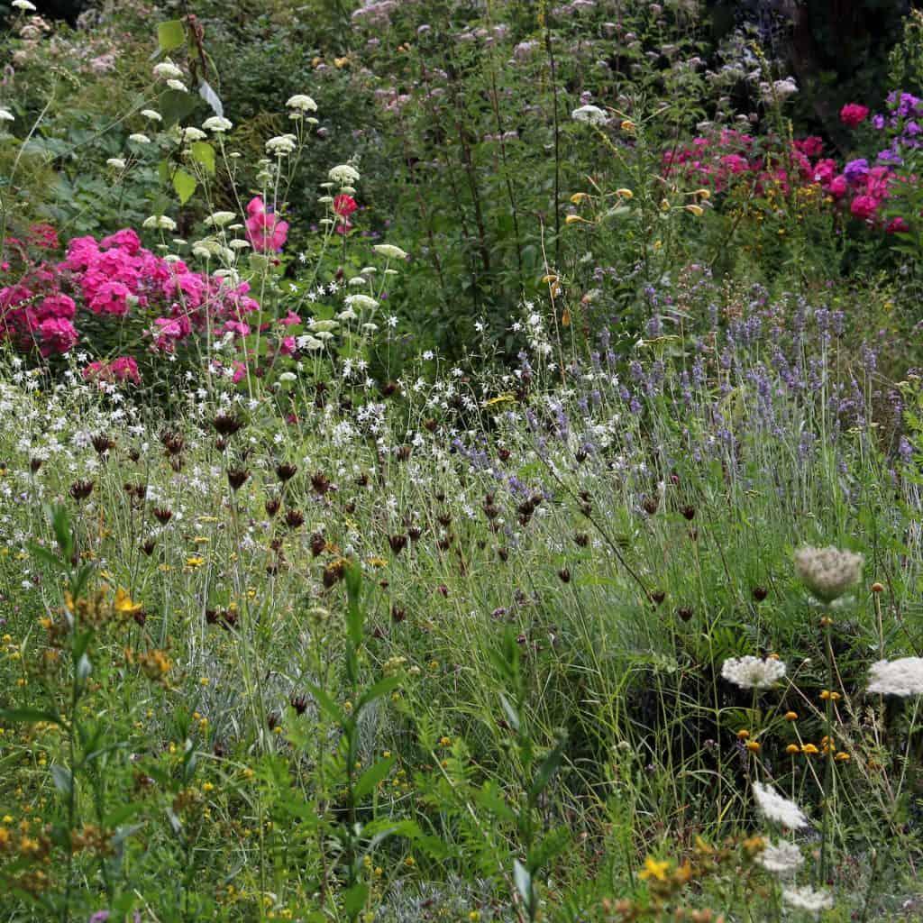 Wunderschöne Gartenwiese.
