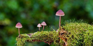 Pilze und Tiere sind wichtig für die Artenvielfalt im Wald.