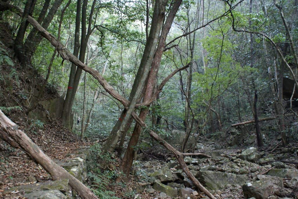 Blick in artenreicher Wald.