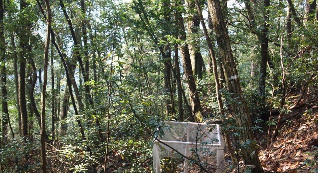 Eine Falle, die im Wald aufgestellt ist.