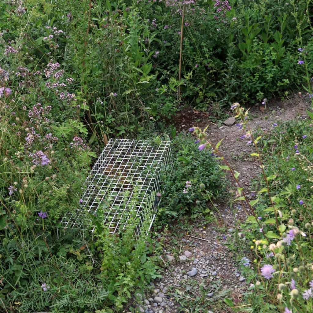 Ein Gitter im Garten soll die Nestreste schützen.