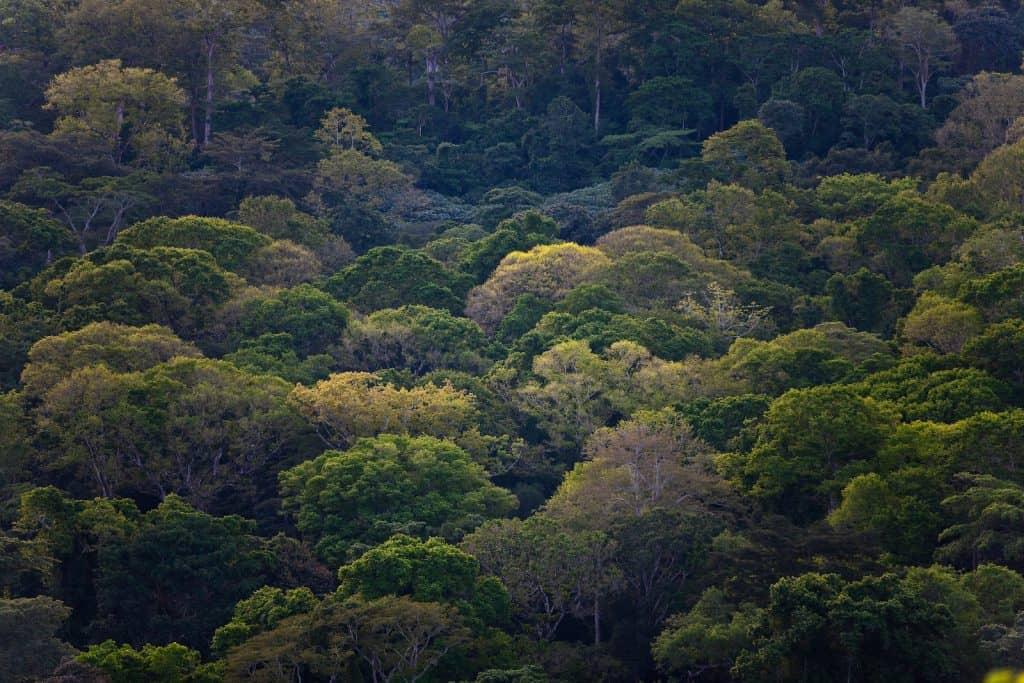 Solch ein Tropenwald ist wichtig für die Artenvielfalt.