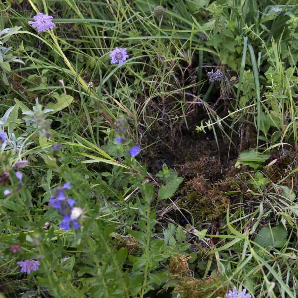 Im Garten sieht man aufgerissene Moosstellen.