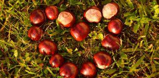 Im Herbst findet man viel in der Natur für Dekorationen.