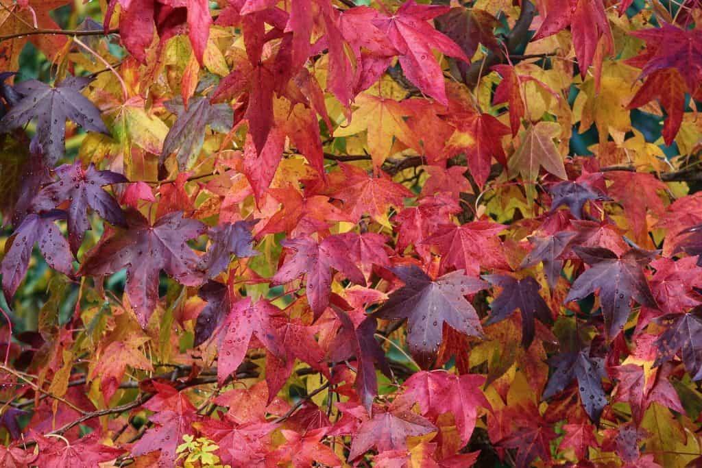 Im Herbst verfärben sich die Blätter in alle Farben.