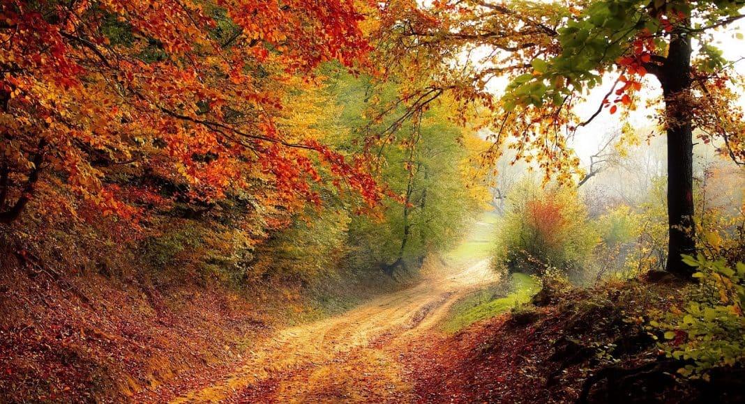 Im Herbst sollte im Garten nicht alles weggeräumt werden um Verstecke für die Tiere zu lassen.