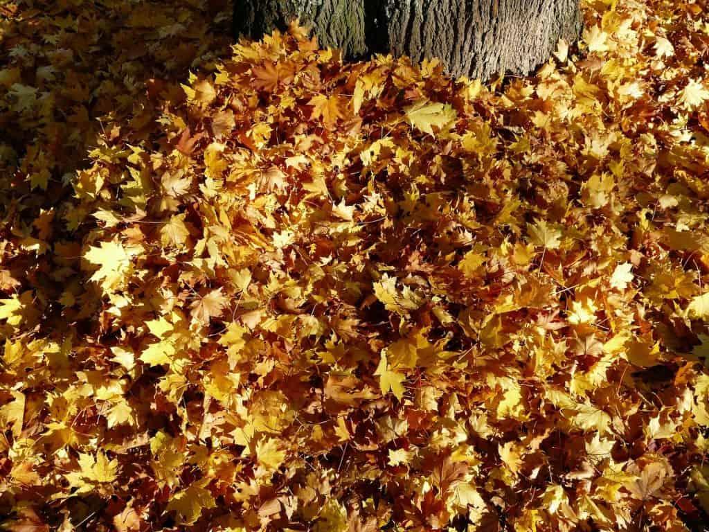 Ein laubhaufen unter einem Baum, in dem sich viele Tiere verstecken können und Schutz vor der Kälte finden.