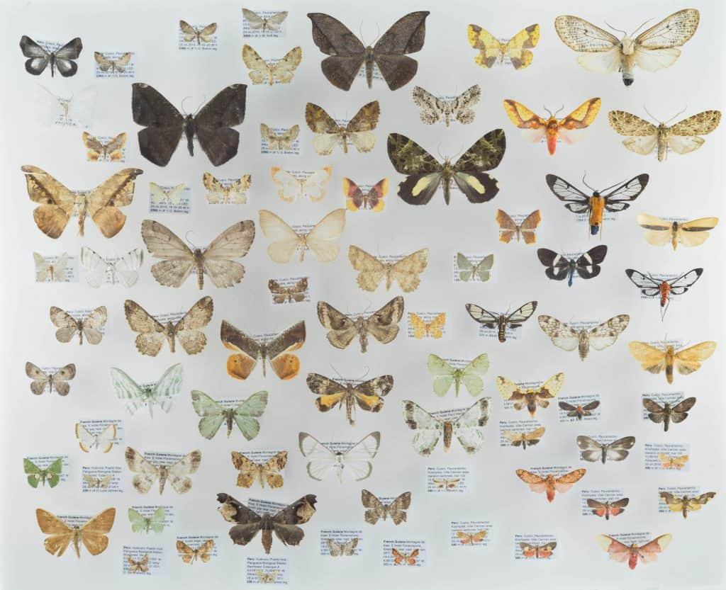 Sammlung von Schmetterlingen in verschiedenen Grössen.