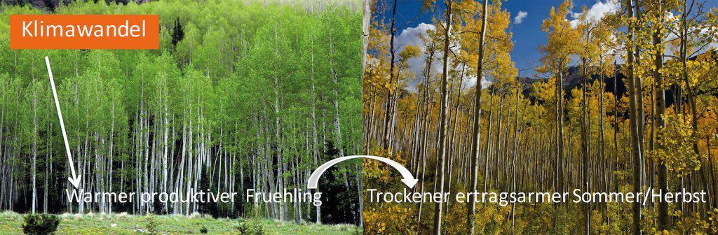 Klimawandel hat Auswirkung auf die Biomasse im Wald.