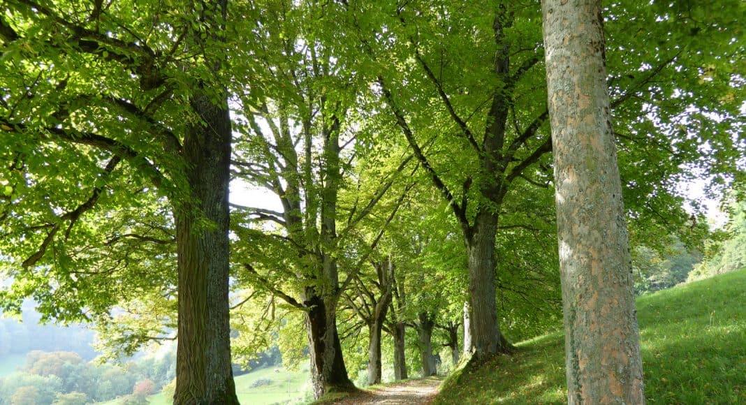 Eine Allee mit Bäumen.