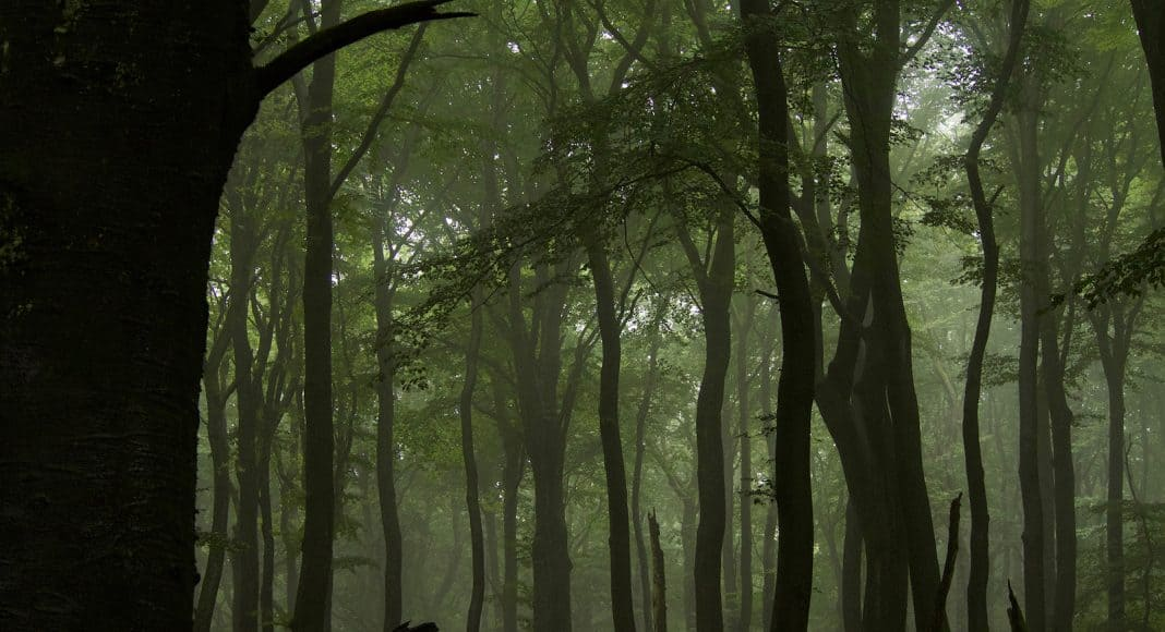 Wälder können unterschiedliche Dienstleitungen bieten.