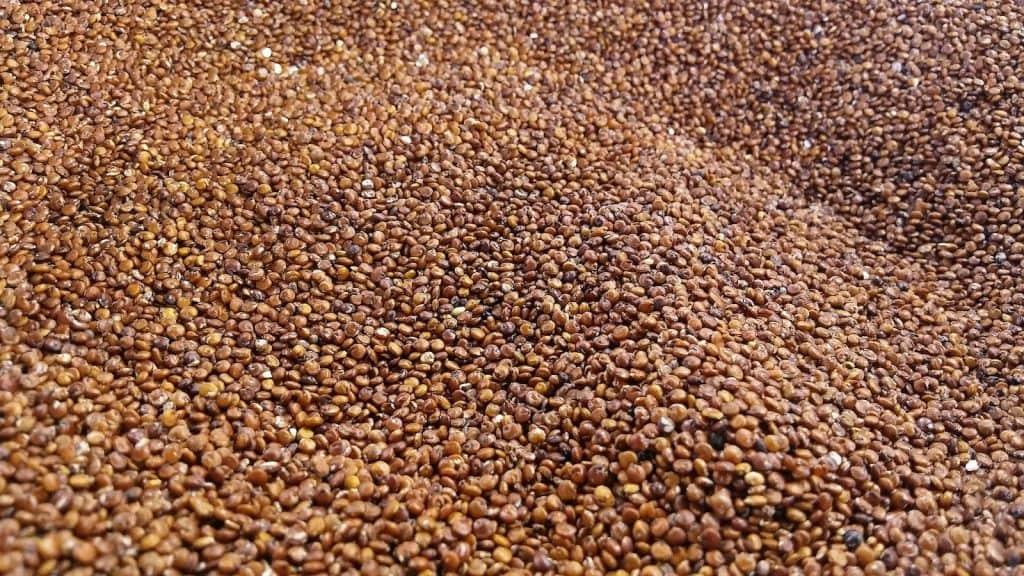 Quinoa gilt als Superfood.