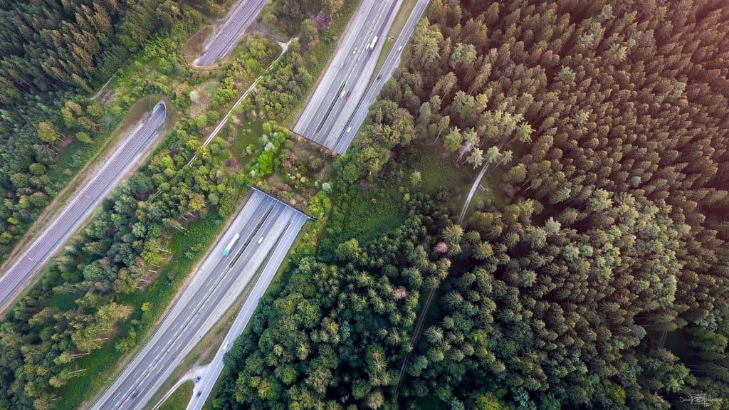 Drohnenaufnahme gewinnt beim Wildtier-Fotowettbewerb.