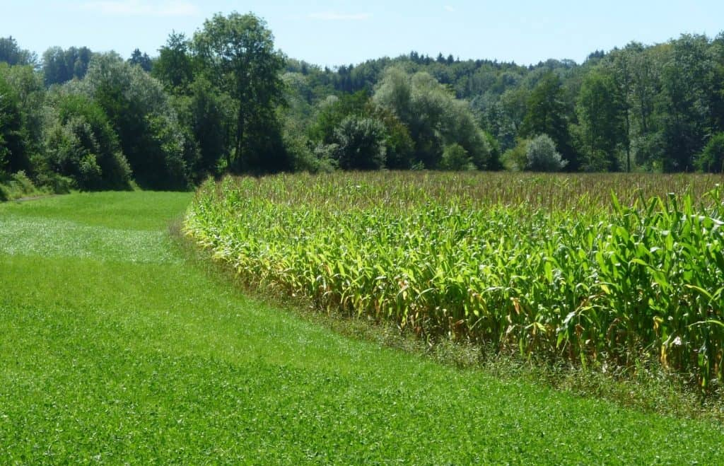 Vor der Renaturierung war hier noch ein Maisfeld.