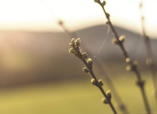 Auch im Winter kann man Bäume anhand der Knospen erkennen.
