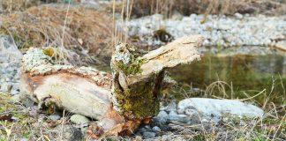 Totholz in Form eines Krokodiles.