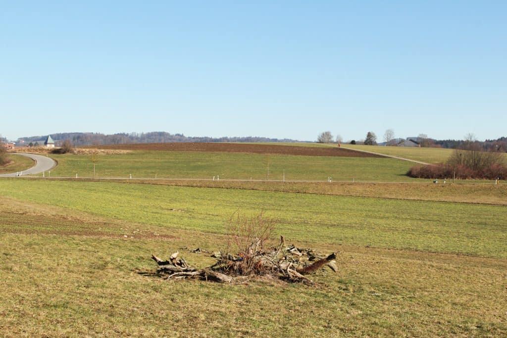 Nur noch das Totholz liegt im Feld.