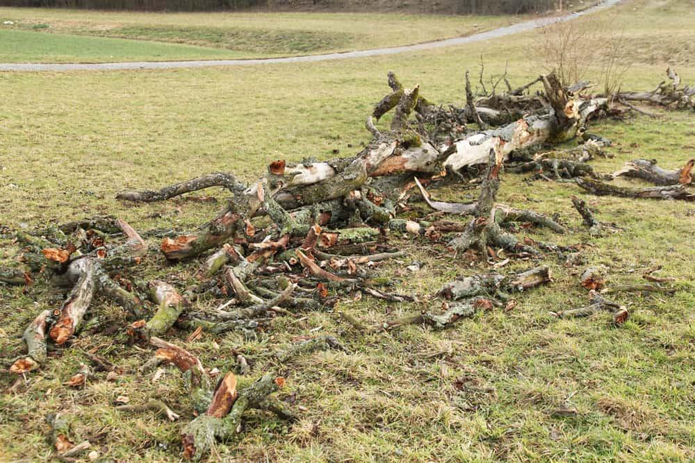 Baum liegt in Stücke am Boden.