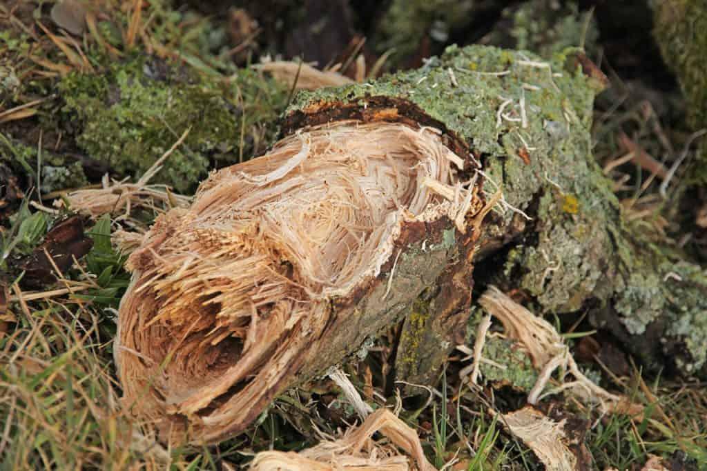 Nur noch zersplittertes Holz bleibt übrig.