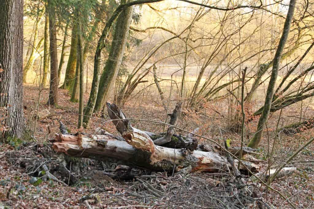 Baumstrunk im Wald.