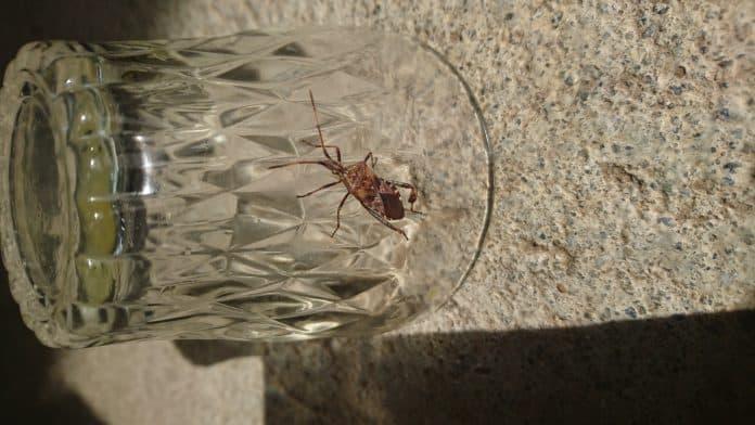 Insektenfund in der Küche  1