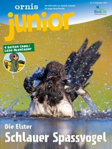 Natur Zeitschrift: Ornis Junior Titelbild.