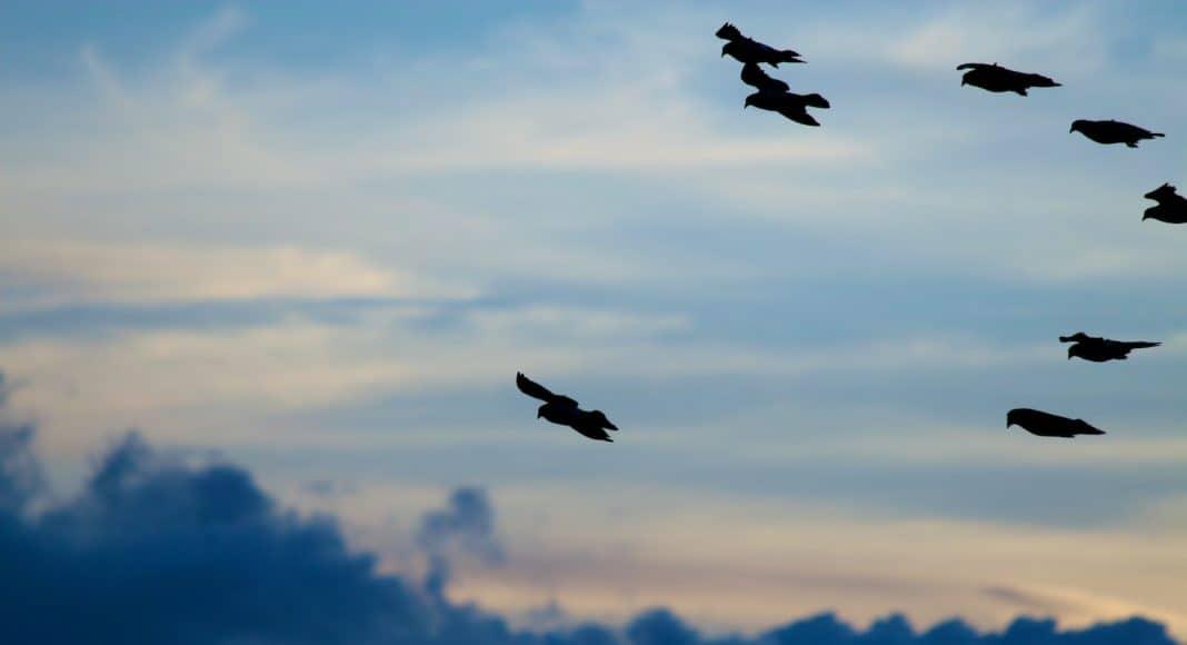 Zugvögel auf ihrer Reise.