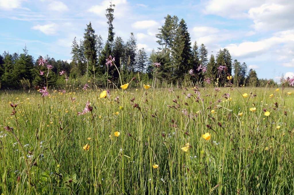 Biodiversitätsförderflächen mit hoher Qualität sind für die Artenvielfalt wichtig.