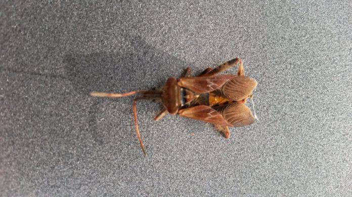 Was ist das für ein Insekt?  1