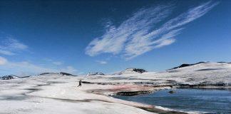 Schneefeld in den Spitzbergen mit blutroter Alge