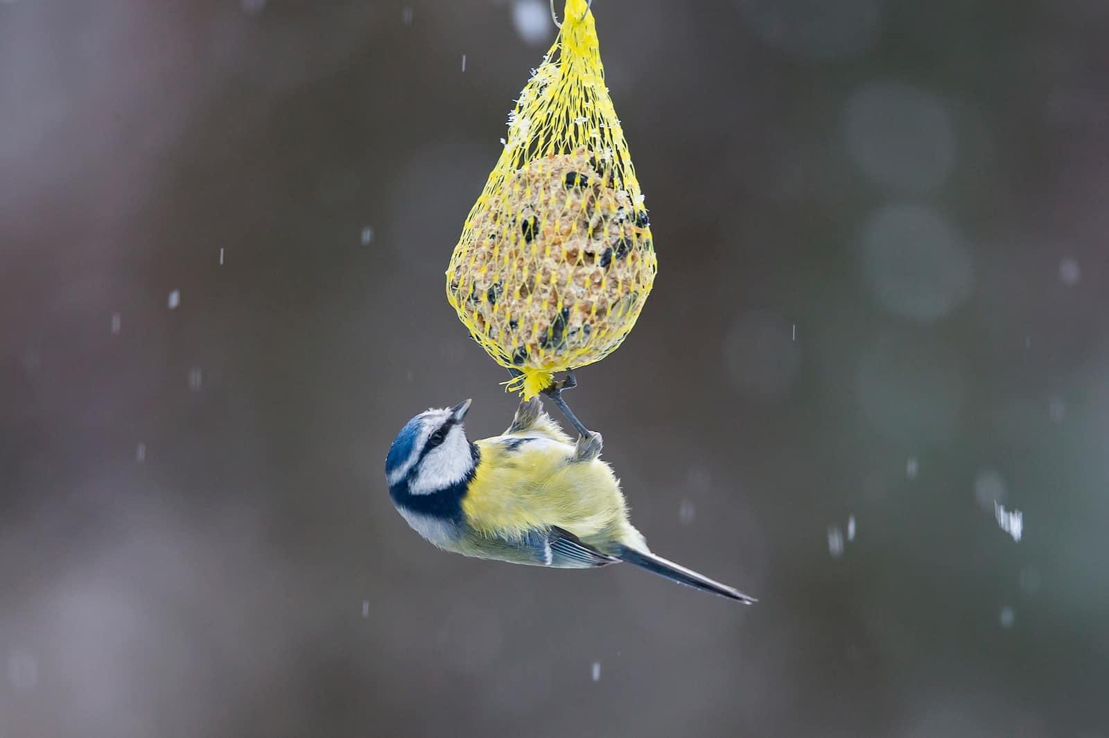 vögel füttern im winter falsche fürsorge oder wichtige
