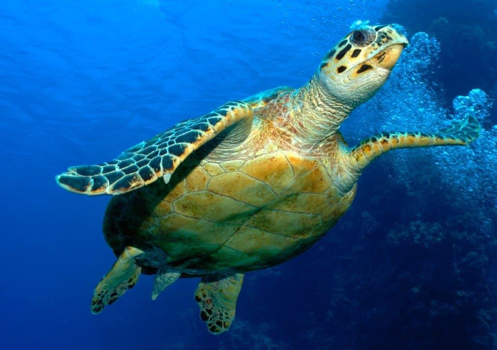Den Meeresschildkröten geht es ein wenig besser.