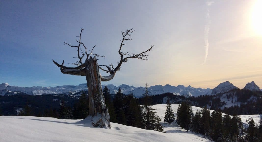 Schneelandschaft mit Baum, Berge im Hintergrund