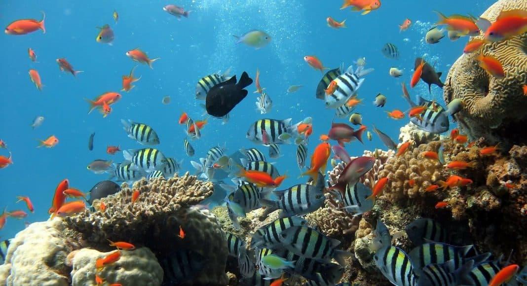 Aquarium mit Zierfischen.