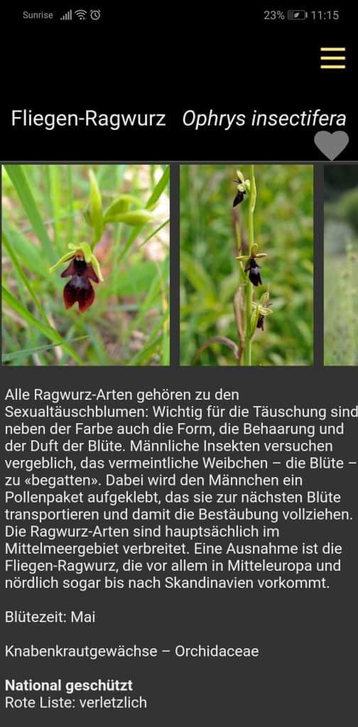Fliegen-Ragwurz im App «Flower Walks».
