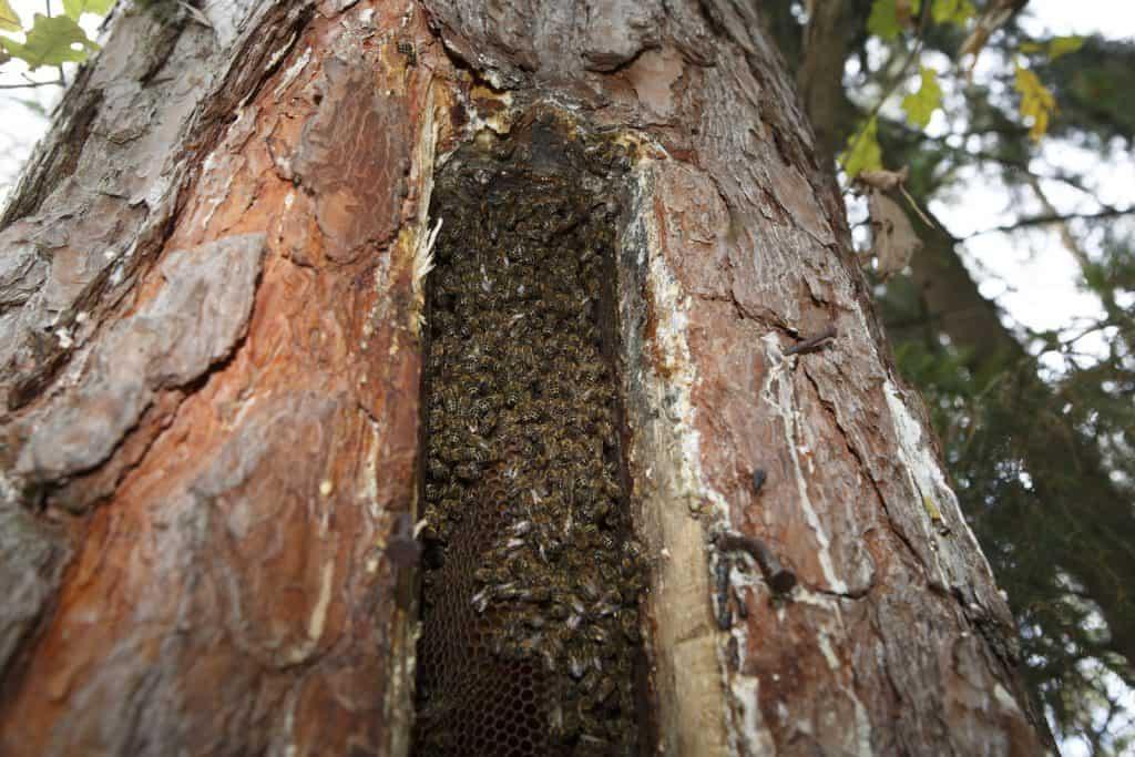 Bienen in einen Baum.
